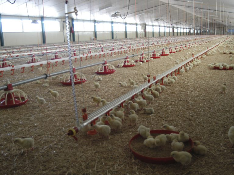 INTEGRATED LIVESTOCK AND MEAT PRODUCTION PROJECTS